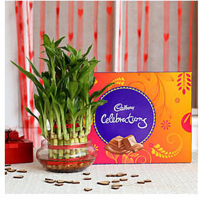 Three Layer Lucky Bamboo with Cadbury Dairy Celebrations